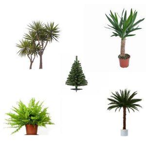 Pflanzen/Dekorationen